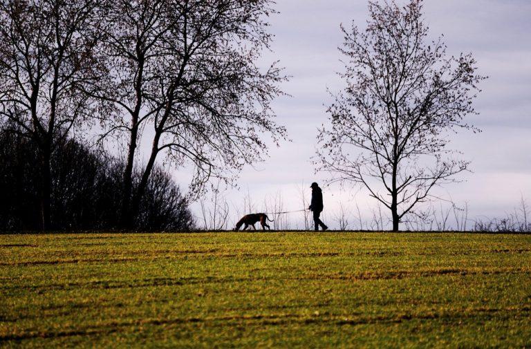 Qu'est-ce qu'un promeneur de chien ?