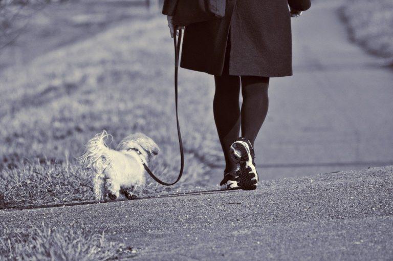Quelle est la durée idéale pour promener son chien ?